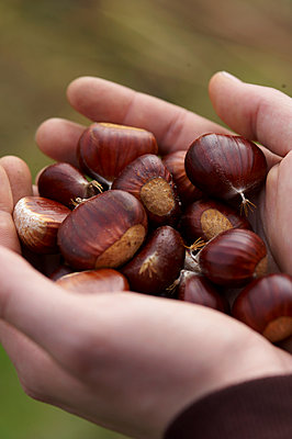 Sweet chestnuts - p1115m890247 by Nikolai Buroh