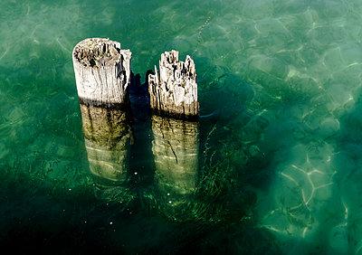 Pfähle und Tang am Bodensee - p979m1557843 von Martin Kosa