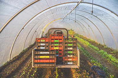 Baby Cucumber - p1402m1466190 by Jerome Paressant