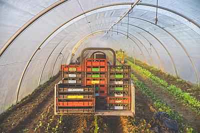 Gemüsegärtnerei - p1402m1466190 von Jerome Paressant