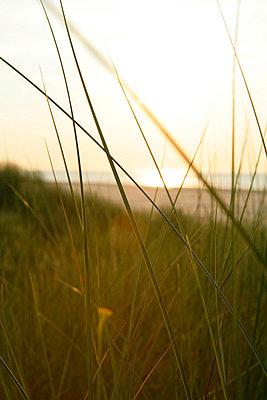 Holländische Küste - p5670679 von ofoulon