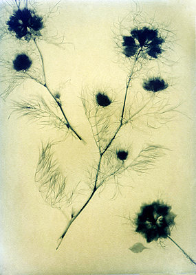 Dried flowers - p945m2163785 by aurelia frey