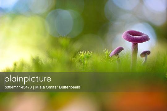 p884m1145479 von Misja Smits/ Buitenbeeld
