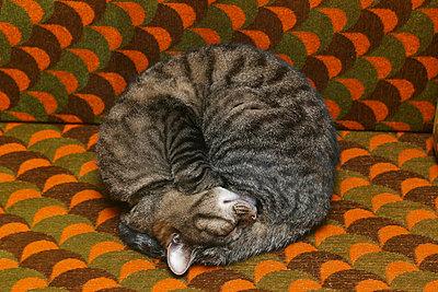 Eingerollte Katze - p1650548 von Andrea Schoenrock