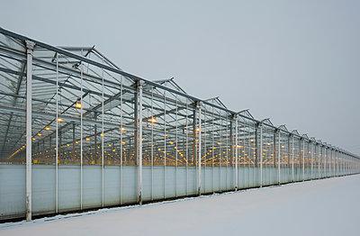 Greenhouse using LED lights, Made, Noord-Brabant, Netherlands - p429m1569377 by Mischa Keijser