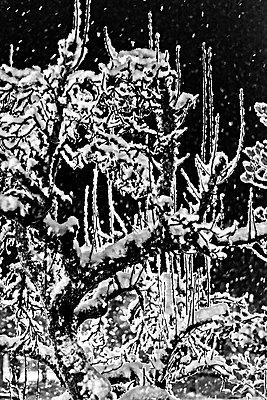 Vereiste Bäume - p1041m2073399 von Franckaparis