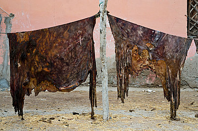 Tanned Animal Hides Hanging to Dry - p1072m1056665 by chinch gryniewicz
