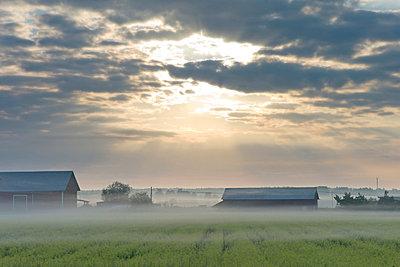 Farmland at sunrise - p575m696079 by Stefan Ortenblad
