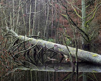 Natur - p1016m792610 von Jochen Knobloch