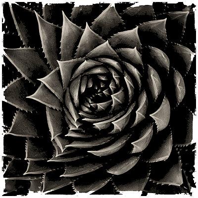 Pinwheel - p1154m1057900 by Tom Hogan