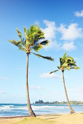 Zwei Strandschönheiten, Oahu, Hawaii - p1196m1128165 von Biederbick & Rumpf