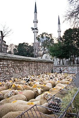 Aïd al-Adha in Istanbul - p1513m2039176 by ESTELLE FENECH