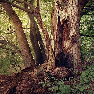The Old Forest VI - p1633m2297668 by Bernd Webler