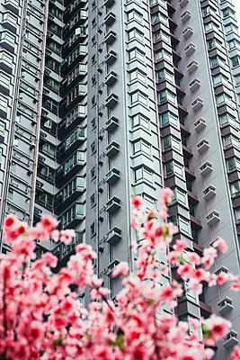 China, Hong Kong, Hong Kong Island, facades of apartment tower, partial view - p300m2058766 by Gemma Ferrando
