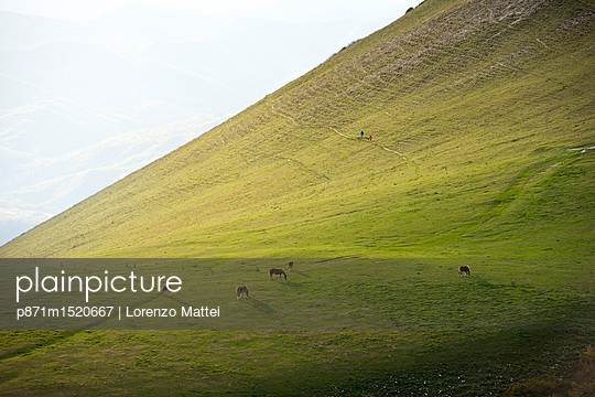 Horses in the fields at sunset, Monte Cucco Park, Apennines, Umbria, Italy, Europe - p871m1520667 by Lorenzo Mattei