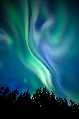 Northern Lights, Tongass National Forest, near Juneau; Alaska, United States of America - p442m2074121 by John Hyde