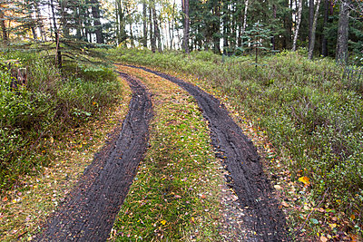 Forest path - p930m1491901 by Ignatio Bravo