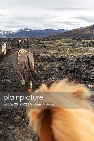 Iceland, Highlands of Iceland, Landmannalaugar, horseback riding. Icelandic horses, Fjallabak Nature Reserve - p300m2042802 von Michael Malorny
