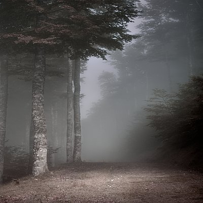 Forest - p1137m2008725 by Yann Grancher