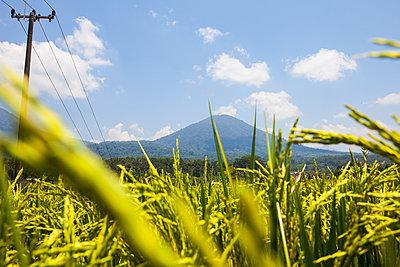 Reisfelder am Vulkan - p304m1077747 von R. Wolf