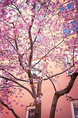 Blossoming tree - p312m1187806 by Dan Lepp