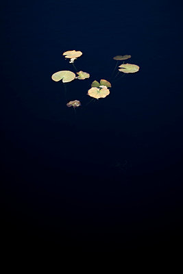 Leaves in water - p4451021 by Marie Docher