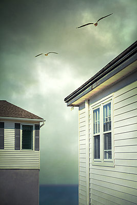 Two Weatherboard Houses with Gulls  - p1248m2063481 by miguel sobreira