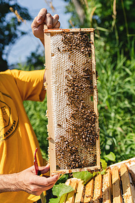 Beehives, Bees and Honey - p1335m2109600 by Daniel Cullen