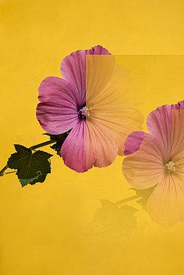 Purpel Flowers  - p1514m2110452 von geraldinehaas