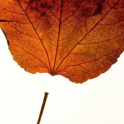 Leaf - p813m778836 by B.Jaubert