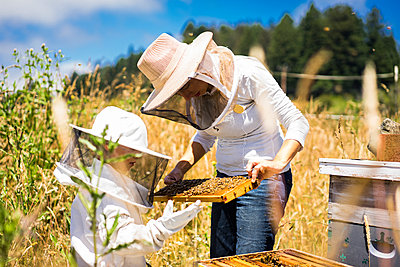 Mother and son examining honeycomb frame while standing on field - p1166m1508423 by Cavan Images