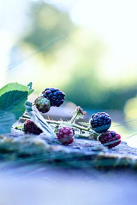 Blackberries - p879m1488120 by nico