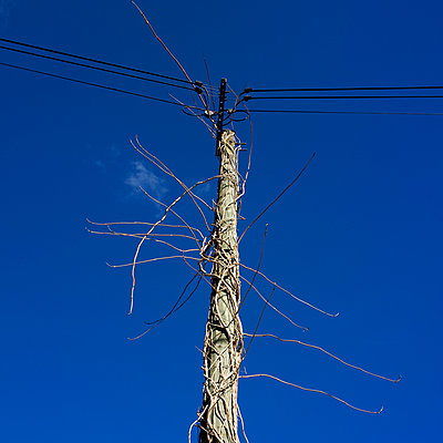 Electric pole - p813m903911 by B.Jaubert
