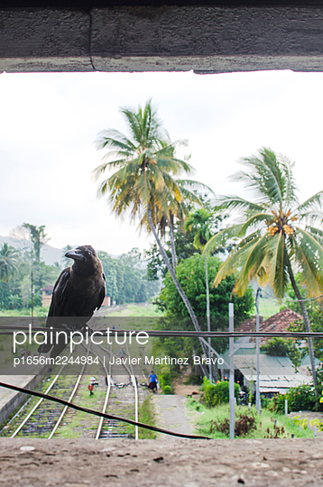 raven at the railroad junction - p1656m2244984 by Javier Martinez Bravo