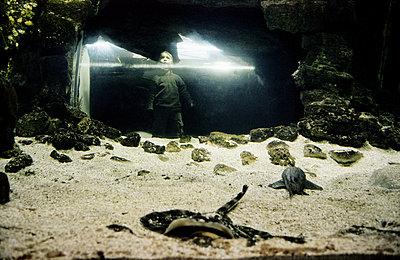 Petit garçon devant un aquarium. - p1270m1090855 by Corinne Nguyen