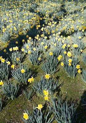 Springtime - p1043m892818 by Ralf Grossek