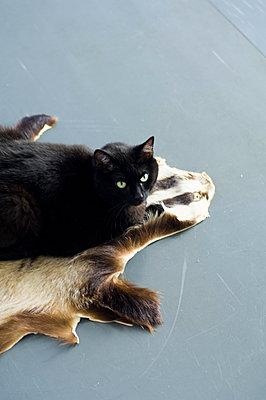 Schwarze Katze liegt auf Tierfell - p1316m1160388 von Peter von Felbert