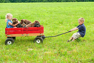 Boy pulling puppies and girl in wagon - p4298014 by yellowdog
