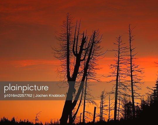 Canada, Dead trees - p1016m2257762 by Jochen Knobloch