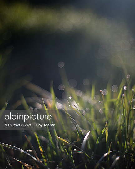 Close-up of grass - p378m2235875 by Roy Mehta