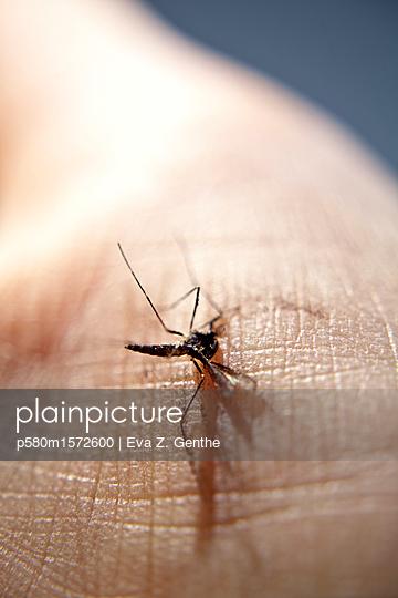 Tote Stechmücke auf Menschenhaut - p580m1572600 von Eva Z. Genthe