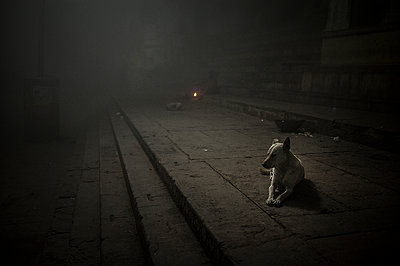 Dog at night - p1007m1144327 by Tilby Vattard