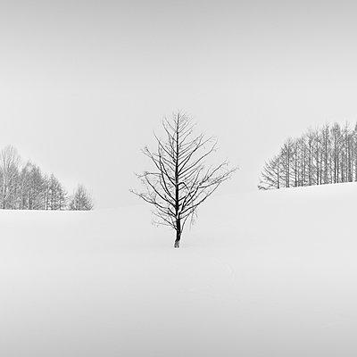 Lone tree in a snowfield, Biei, Hokkaido, Japan - p1166m2108029 by Cavan Images