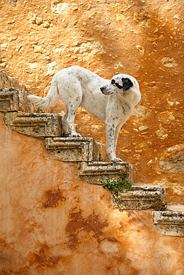 Hund  - p1205m1033033 von Toni Anzenberger