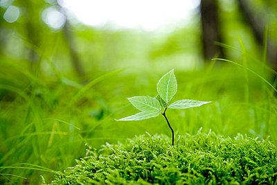 Tree seedling growing amongst moss and grass - p5143635f by ZUKAGAWA