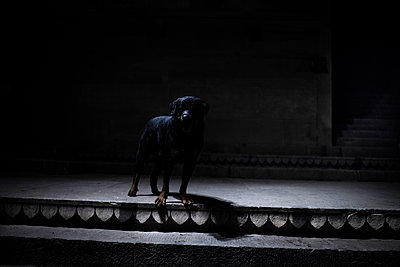 Dark silhouette of dog in the shadows - p1007m2099029 by Tilby Vattard