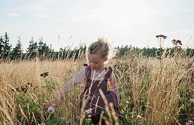 young girl sitting in a meadow picking flowers at sunset - p1166m2137962 by Cavan Images