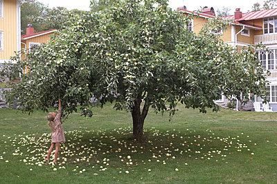 Girl picking apples - p312m2079510 by Wenblad-Nuhma