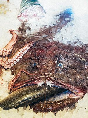 Fischtheke - p1263m1511112 von Tomas Engel