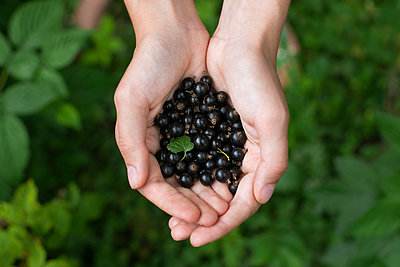 Woman's cupped hands holding blueberries - p1427m2085262 by Mykhailo Lukashuk